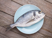 Fresh dorado fish. On wooden table Royalty Free Stock Images