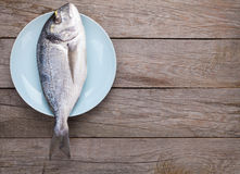 Fresh dorado fish. On wooden table with copy space Stock Images