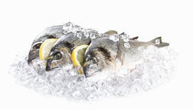 Fresh dorado in ice Royalty Free Stock Photography