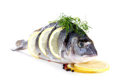 Fresh dorado Stock Images