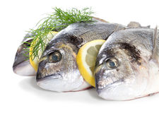 Fresh dorado Stock Photography