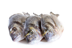 Fresh dorado Royalty Free Stock Photos