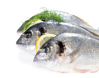 Fresh dorado Royalty Free Stock Photo
