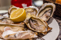 Fresh dozen oysters on plate Royalty Free Stock Photos