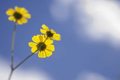 Fresh Dreamy Daisy Background Stock Image