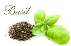 Fresh and dried basil isolated Royalty Free Stock Photos
