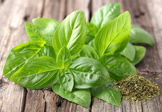 Fresh and dried basil Royalty Free Stock Images