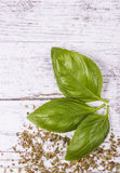 Fresh and dried basil plant for healthy cooking, herbs and spices. Stock Photos