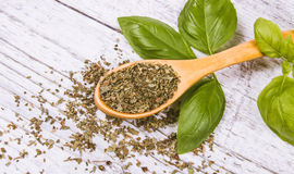Fresh and dried basil plant for healthy cooking, herbs and spices. Royalty Free Stock Photo