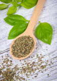 Fresh and dried basil plant for healthy cooking, herbs and spices. Stock Photo