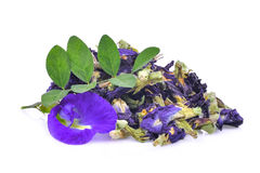 Fresh and dried butterfly pea,blue pea,clitoria ternatea Stock Images