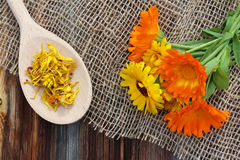 Fresh and dried calendula on sacking on wooden background Stock Photography