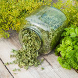 Fresh and dried chopped parsley leaves Royalty Free Stock Photo