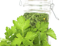 Fresh and Dried Cilantro (can be parsley). Stock Photos