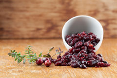 Fresh and dried cranberries. Fresh organic cranberries and a bowl with dried cranberries Royalty Free Stock Photo