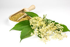 Fresh and dried elder blossoms Stock Photography