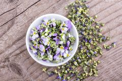 Fresh and dried flowers from violet heartsease. Top view of a white bowl with fresh and dried flowers from field pansy Stock Photo