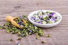 Fresh and dried flowers from violet heartsease royalty free stock photo