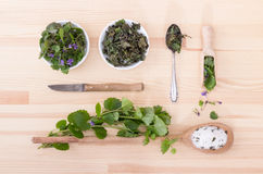 Fresh and dried ground ivy Stock Images