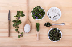 Fresh and dried ground ivy. Herbal salt, fresh and dried ground ivy Royalty Free Stock Images