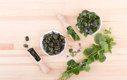 Fresh and dried ground ivy Stock Photos