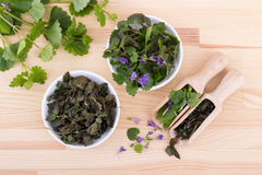 Fresh and dried ground ivy. Porcelain bowls and wooden spoon with fresh and dried ground ivy Stock Images