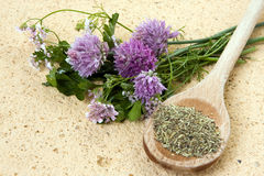 Fresh and dried herbs Royalty Free Stock Image