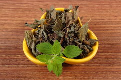 Fresh and dried lemon balm in bowl on wooden table, herbalism Stock Photo