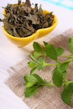 Fresh and dried lemon balm in bowl on wooden table, herbalism Royalty Free Stock Images