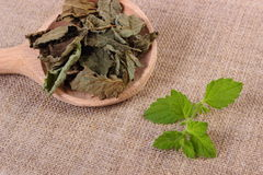 Fresh and dried lemon balm with spoon on jute canvas, herbalism Stock Photos