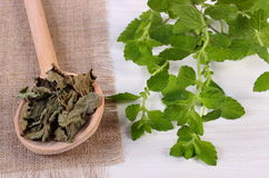 Fresh and dried lemon balm with spoon on white wooden table, herbalism Royalty Free Stock Images