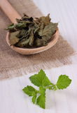Fresh and dried lemon balm with spoon on white wooden table, herbalism Stock Photo