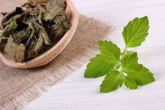 Fresh and dried lemon balm with spoon on white wooden table, herbalism Royalty Free Stock Image