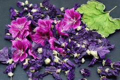 Fresh and dried mallow flower, dried leaf Royalty Free Stock Images