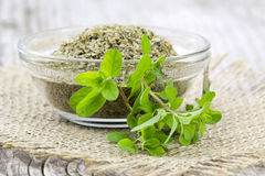 Fresh and dried Marjoram Royalty Free Stock Photos
