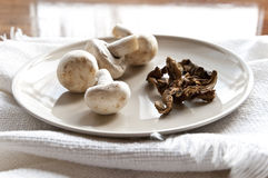 Fresh and dried Mushrooms Stock Image
