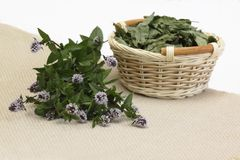 Fresh and dried peprmint Royalty Free Stock Image