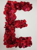 Letter E formed with red rose petals. Fresh and dried rose petals, background and texture, design for wedding or anniversary royalty free stock photo