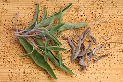 Fresh and Dried Sage leaves Royalty Free Stock Images