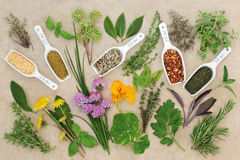 Fresh and Dried Spice and Herb Collection Stock Photo