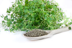 Fresh and dried thyme Royalty Free Stock Photography
