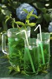 Fresh drink mint. Glasses of water and mint in garden Stock Images