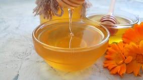 Fresh dripping  honey marigold flower, harvest slow motion delicious summer. Fresh honey dripping marigold flower slow motion delicious summer harvest stock footage
