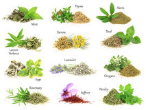 Fresh and dry aromatic herbs