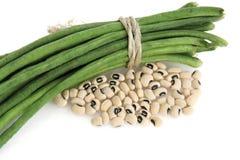 Fresh and dry black eyed bean. On white background Royalty Free Stock Image