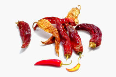 Fresh and dry Chilli Stock Photography