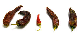 Fresh and dry Chilli Royalty Free Stock Image