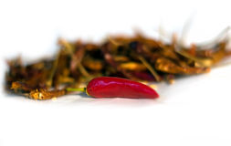 Fresh and dry Chilli with seeds Royalty Free Stock Images