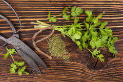 Fresh and dry coriander herb. stock photos