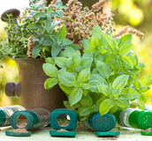 Fresh and dry herbs - spices Stock Photography